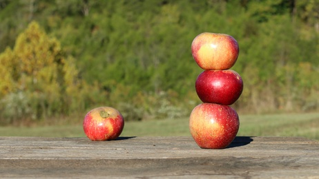 Bright Red Colored Winesap Apples Stacked Up On Eachother On Worn, Wooden Table With Trees And Shrubs Beyond On A Farm In The Mountains Of South West Virginia