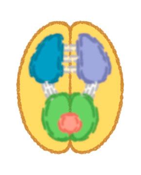 brain_bipolar