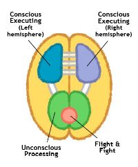 brain_diagram_me