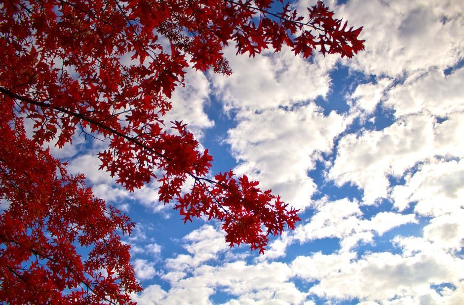 sky and red leaves