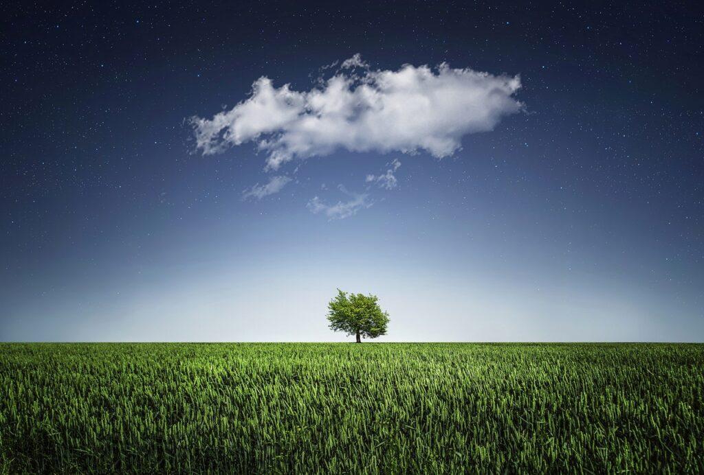 tree natur nightsky cloud