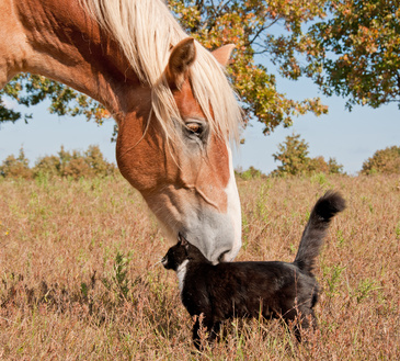horse and cat